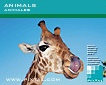 Animals (CD122)