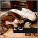 Pet Dog 2 (NDS-NDV039)