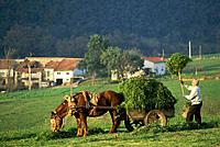 Cantabria. Spain