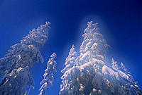 Mount Seymour. British Columbia. Canada
