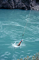 Bungee jumping. Kawarau gorge. New Zealand