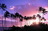 Palm trees at sunrise in Lydate Beach. Kauai. Hawaii. USA