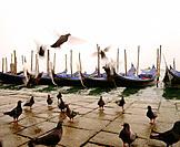 Pigeons and gondolas. Venice. Italy