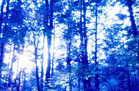 Forest scene. Poconos. Pennsylvania. USA