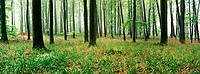 Beech forest. Eichsfeld-Hainich-Werratal Natural Park. Germany
