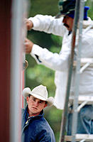 Cowboys working in corral. Texas. USA