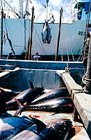 Tuna fishing, Cádiz, Spain
