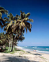 Palms at beach. Playa Cabarete. Dominican Republic