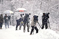 Wildlife photographers in snowstorm