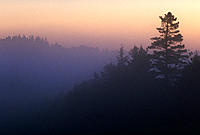 Sunrise & morning mist silhouetting trees