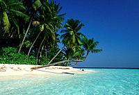 Meer Palmenstrand