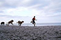 Woman and dogs running on beach