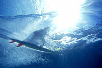 Underwater vu surfer catch wave overhead shadow & motion sunburst D1208 NorthShore Oahu