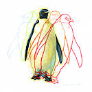 Penguin locomotion. Artwork illustrating the way that a penguin moves. The crayon outlines, which are seen on either side of this emperor penguin (Apt...