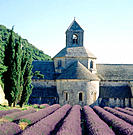 Abbey of Notre-Dame de S&#233;nanque and lavender field. Provence. France