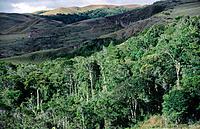 Gran Sabana. Canaima National Park. Venezuela