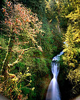 Shepperds Dell Falls. Young Creek. Multnomah County. Oregon. USA