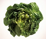 Whole Fresh Head of Butterhead Lettuce