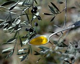 Olive oil on spoon in front of olive branch with olives (4)