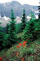 Wenkchemna PeaksBanff National ParkAlberta, Canada