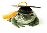 Frog in Graduation Cap
