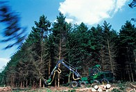 CREDIT: JEREMY WALKER/SCIENCE PHOTO LIBRARY Commercial forestry.  Machine being used to fell a tree.
