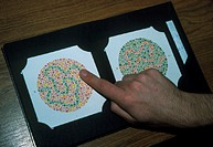 Person undertaking a colour blindness test, pointing to distinguish a loop of green dots concealed in a random network of coloured dots. Colour blindn...
