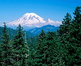 Mount Rainier with conifer trees, Gifford Pinchot National Forest, Washington, USA