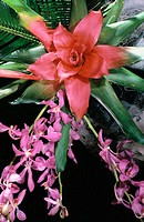 Bromeliad and orchid