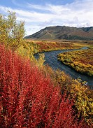 Klondike River and Ogilvie Mountains in fall colours. Yukon. Canada