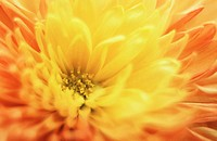 Flower close-up (thumbnail)