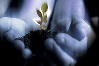 Close_up of a human hand holding a plant sapling in soil
