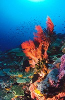 Reef structure. Komodo National Park. Indonesia