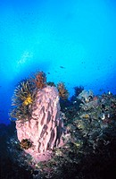 Reef structure. Papua New Guinea