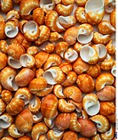 Mussels, Snail shell