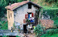 Donkey getting into a cottage in Cabo Oroño. Biscay. Euskadi. Spain