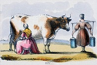 Lithographic plate showing two milkmaids with a cow in the countryside. Plate taken from ´Graphic Illustrations of Animals - Showing Their Utility to ...