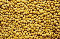 Many soya beans