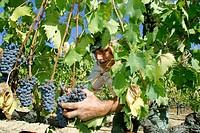 Chianti region vintage. Tuscany, Italy