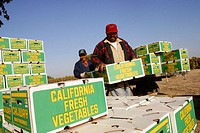 "Loading and shipping boxes labeled ""California fresh vegetables"""