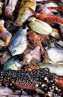 Seafood. Campo Moro. South Corsica. Corsica Island. France