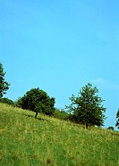 Green hillside