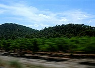 Green hills on side of road, blurry