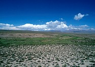 Chile, El Norte Grande, Altiplano, Lauca National Park, flatland with low grasses (thumbnail)