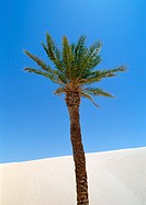 Tunisia, Sahara, palm tree with sand dune and blue sky in background