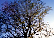 Tree against sky, low angle view, blurry