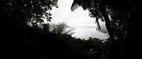New Zealand, sea viewed through gap in vegetation, panoramic view