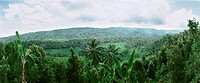 Indonesia, tropical forest, high angle view, panoramic view