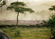 Africa, Tanzania, herd, blurred