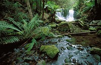 Horseshoe Falls in Mount Field National Park. Tasmania. Australia